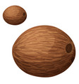 whole coconut cartoon icon isolated vector image vector image
