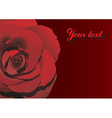 Red Rose Design with Text Space vector image vector image
