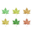 set realistic maple leaves vector image