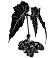 begonia vector image
