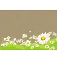 bright chamomile field vector image vector image