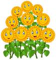 Cartoon happy sunflowers vector image