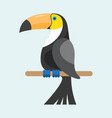 toucan sitting on branch vector image