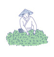 asian woman harvests tea leaves from bush vector image