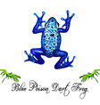 Blue Frog vector image vector image