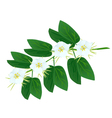 Snowy Orchid Flowers on A White Background vector image vector image