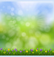 spring flowers nature poster with grass vector image vector image
