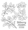 bilberry plant set on white background vector image vector image