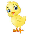 happy chicks cartoon vector image