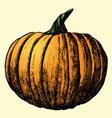 pumpkin sketch vector image vector image
