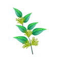Bunch of Night Blooming Jasmine on White Backgroun vector image vector image