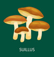 edible mushroom suillus luteus isolated wild vector image vector image