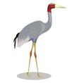 sarus crane cartoon vector image vector image