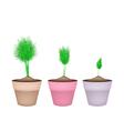 Fresh Green Dill in Ceramic Flower Pots vector image vector image