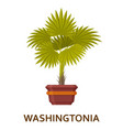 washingtonia decorative houseplant in pot vector image vector image