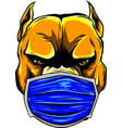 dog with a protective mask on his face vector image