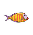 isolated cichlid aquarium fish vector image vector image