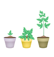 Three Water Dropwort in Ceramic Flower Pots vector image vector image