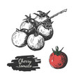 cherry tomatoes drawing vector image vector image