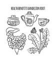 dandelion root benefits pharmacy vector image vector image