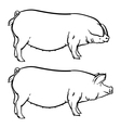 Drawing outline Hand drawn pig isolated vector image vector image