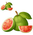 guava fruit cartoon icon isolated on white vector image vector image