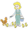 poultry woman feeding chickens vector image