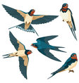 Swallows on white background vector image vector image