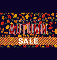 banner template for autumn sale vector image vector image