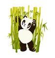 cute panda bear do morning exercises in bamboo