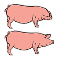 Hand drawn pig isolated pork farm bacon sketch vector image vector image
