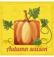 utumn Orange Square stylized Pumpkin Vegetable vector image vector image