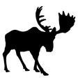 Adult moose vector image vector image