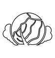 cabbage icon black color flat style simple image vector image vector image