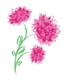 Three peonies on white background vector image vector image