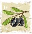 fresh olive vector image