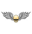 dead skull with wide forehead and wings vector image