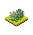 green bush with flowers isometric 3d icon vector image vector image
