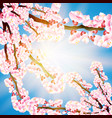 pink petals fall on a transparent background vector image