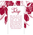 sketch linear tulips blossom vector image vector image