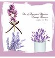 Lavender set bouquet collection vector image vector image