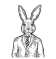 rabbit businessman engraving vector image vector image