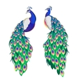 Set of two peacocks isolated on white background vector image