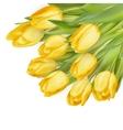 Bouquet of yellow tulips EPS 10
