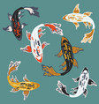 colorful different kinds of carp koi fish in the vector image