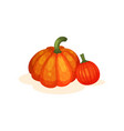 two fresh ripe whole pumpkins vector image
