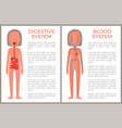 digestive and blood system color anatomical image vector image vector image