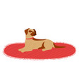 dog lying on carpet resting isolated at white vector image