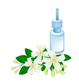 Essential Oil with Orange Jessamine or Mock Orange vector image