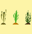 set of cactuses in different colors vector image vector image